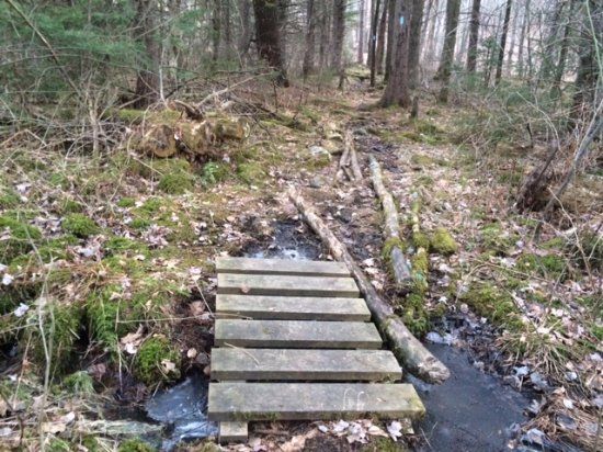 Cornwall, คอนเน็กติกัต: Mohawk State Forest, CT-trail in early spring