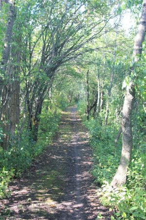 Port Colborne, Kanada: The path that surrounds the wetlands