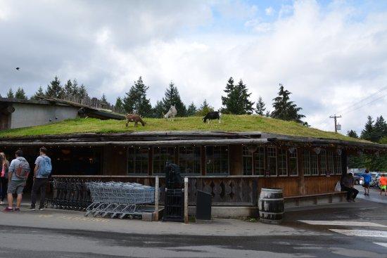 Coombs, Canadá: Chèvres sur le toit de l'Old country market