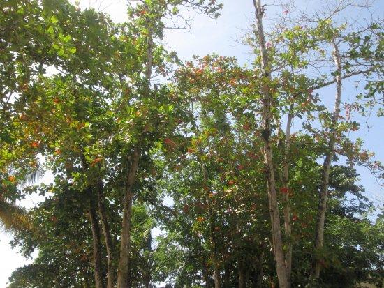 Castara Bay: NATURE SPEAKS