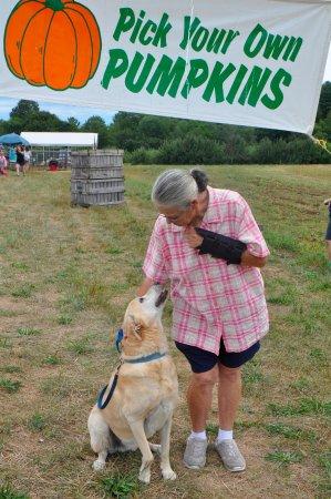 Hampton Falls, NH: Pet Friendly.