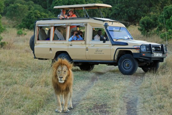 Fairmont Mara Safari Club: walking towards out jeep