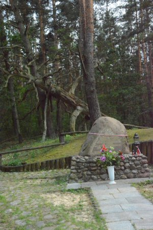 Mazovia Province, Polonia: Place, where Pine of Partisans used to stand