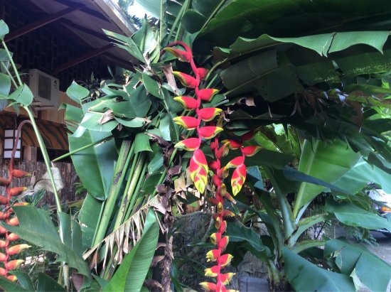Sepilok Jungle Resort: photo0.jpg