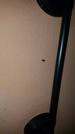 Hampton Inn and Suites - Durant : Roach in Bedroom by night stand