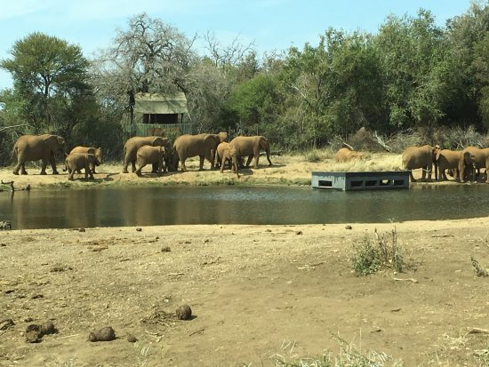 Jaci's Safari Lodge: Terrapin Hide at Jaci's camp