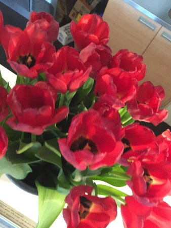 Ibis Budget Amsterdam Airport: Those tulips were welcoming every guest at the front desk. It's amazing.