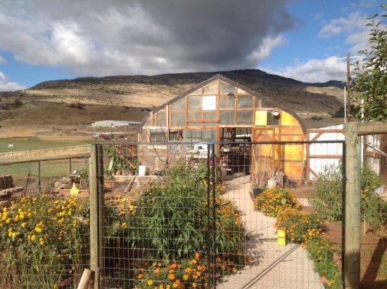 K3 Guest Ranch Bed & Breakfast: Greenhouse
