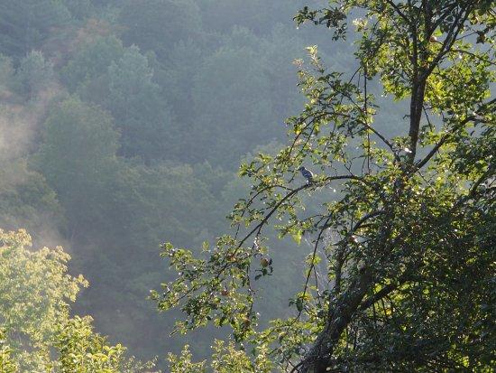 Mountain Valley Retreat B&B: photo1.jpg