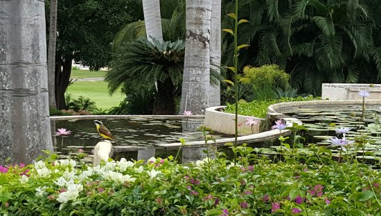 Casa Velas: Lush landscaping and lots of birds