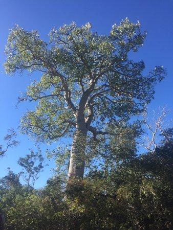 Undara Volcanic National Park, Austrália: photo3.jpg