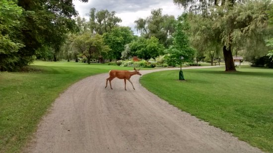 Vernon, Canada: One of the regular visitor
