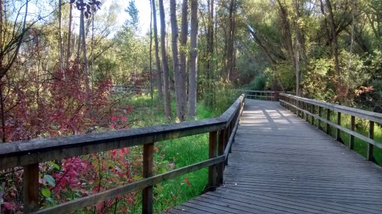 Polson Park: Walkway through a beautiful place