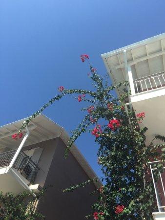 Apartments George照片
