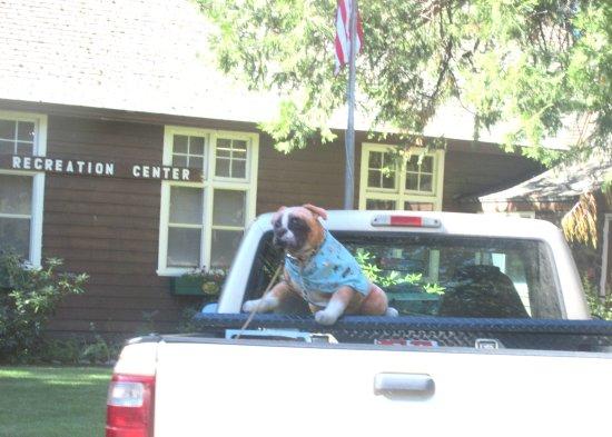 Recreation Center (and Dog Statue in Truck), Mount Shasta City Park, Mount Shasta, CA