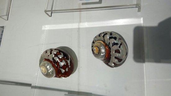 Dalian Shell Museum: 大连贝壳博物馆真的很不错,里面很多漂亮的贝壳,就在星海广场边上,而且可以买一些贝壳纪念品,几块钱的几十块钱的都有,可以随便挑。Very nice, a good shell museum!