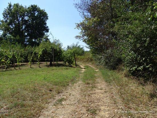 Ecomuseo delle Rocche del Roero: Sentiero del pellegrino
