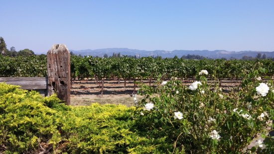 Napa Valley Wine Country Tours: Ahhh...the beauty of wine country