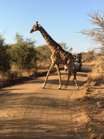 Footprints in Africa - Day Tours