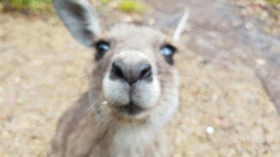 Arrawarra, Australien: 20160915_074529_large.jpg