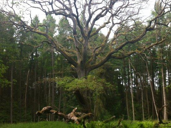 Lauterbach, Alemania: лес