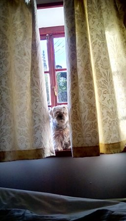 Porlock Weir, UK: Rosie sitting in the window.
