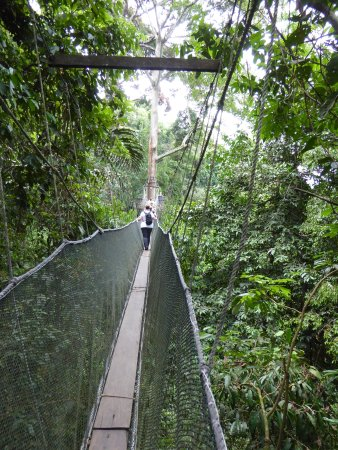 Poring Treetop Canopy Walk Photo & the canopy walk - Picture of Poring Treetop Canopy Walk Kota ...