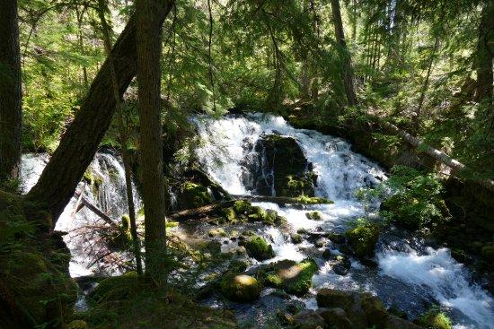 Prospect, OR: In 15 Minuten Fussdistanz liegt dieser wilde Wasserfall im Wald.