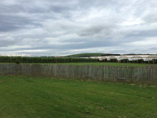 Laurencekirk, UK: Fruit Vines