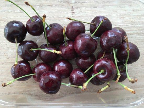 Laurencekirk, UK: Homegrown Cherries