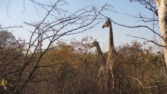 Victoria Falls, Zambia: in insolita compagnia...