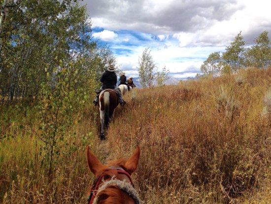R Lazy S Ranch照片