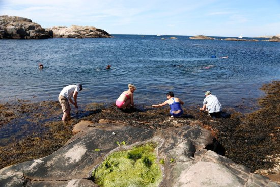 Vastra Gotaland County, Suecia: Seaweed Safari