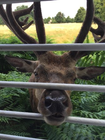 Caffe La Fiamma: Deer at the window