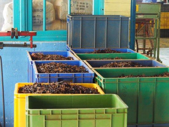 Bluefield Tea Gardens: photo0.jpg