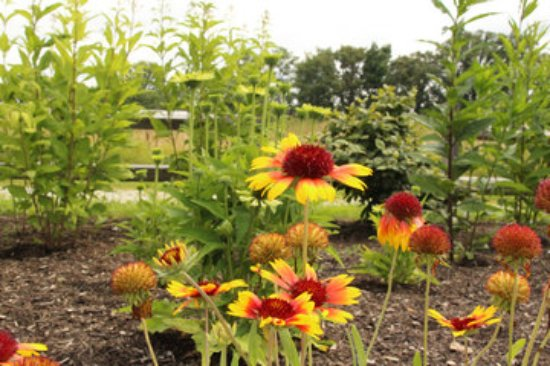 Northwood, OH: Pollinator garden and monarch butterfly waystation