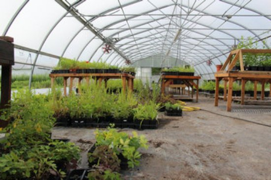 J.C. Reuthinger Memorial Preserve: one of two native plant greenhouses