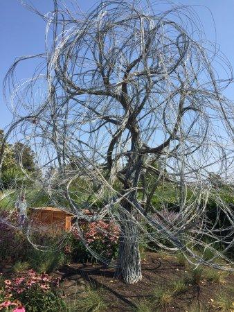 Cornerstone Sonoma: Wire Tree Sculpture In The Cornerstone Gardens!