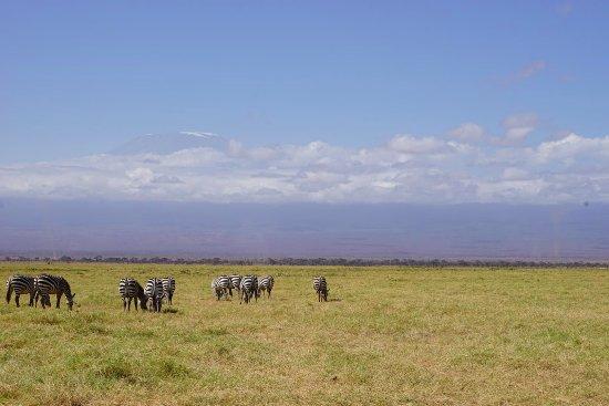 Amboseli National Park, Kenia: Mt. Kilimanjaro