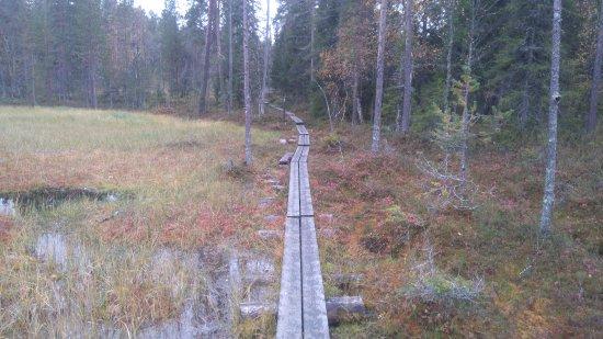 Oulanka National Park, Finland: Trasa brązowa, 5 km. Przejście nad samym jeziorem