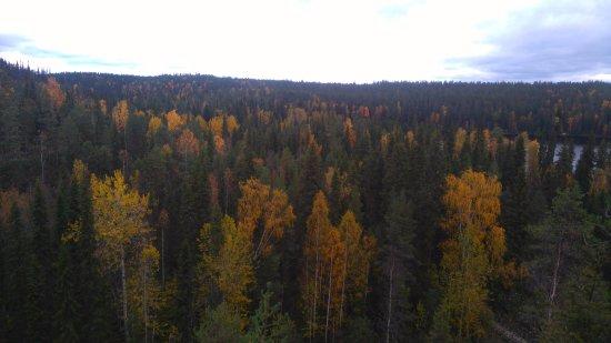 Oulanka National Park, Finland: Kolorowe drzewa w połowie września