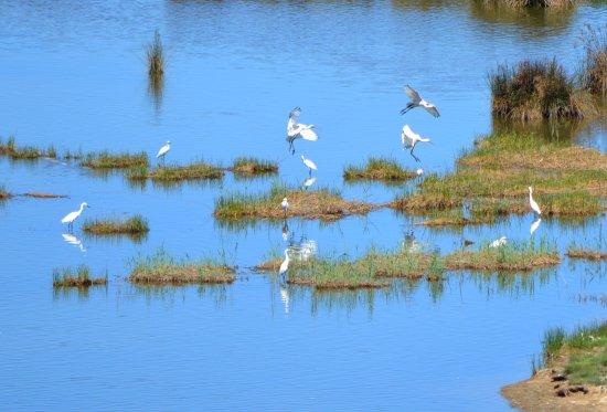 Gautegiz Arteaga, Spanien: The lagoon
