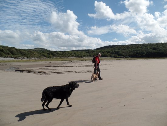 Silverdale, UK: Walking with our dogs on Morecambe Bay