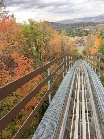 Alpine Coaster : Fall view from the coaster