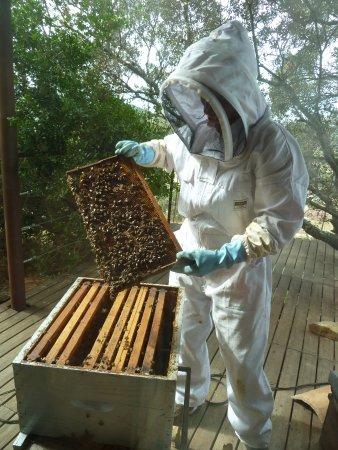 Montseret, Francia: Démonstration autour de la ruche