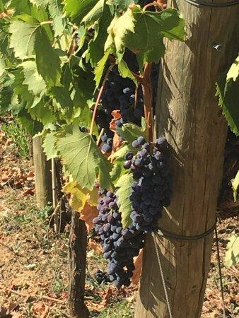 Wine Tour in Tuscany: photo0.jpg