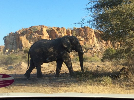 Limpopo Province, Sør-Afrika: photo6.jpg