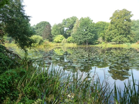 Glansevern Hall Gardens: Incredible reflections in the lake.more reflections !