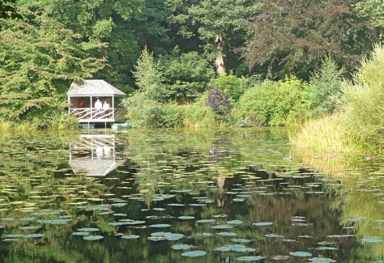 Glansevern Hall Gardens: More reflections !