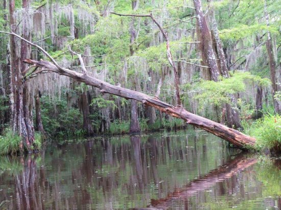 "Slidell, LA: I think this tree inspired something in ""The Princess and the Frog""."